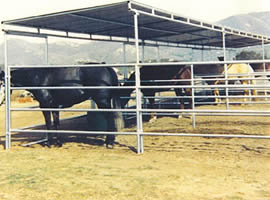 Corral panels shelter provides shade for horses