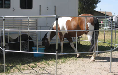 A horse is enclosed in the round-pipe portable panels