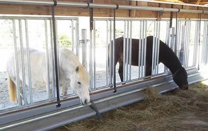 Two horses are enclosed in the feed barrier eating hay